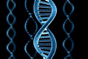 Незаменимые аминокислоты — понятие и виды