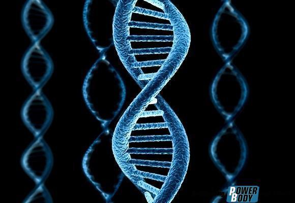 8 незаменимых аминокислот