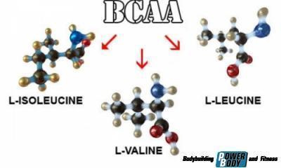 bcaa-aminokislotyi