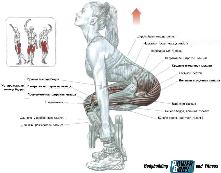 приседания с гантелями мышцы