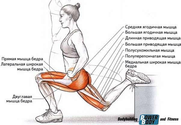 Болгарские выпады. Работающие мышцы