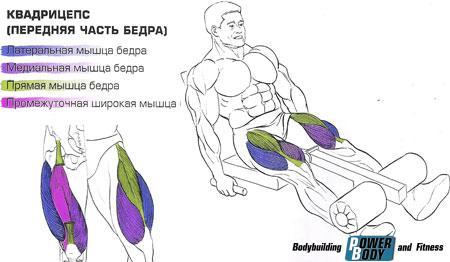 Разгибания ног в тренажере мышцы