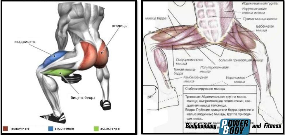 Приседания сумо мышцы