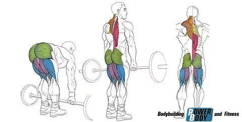 Мертвая тяга на прямых ногах мышцы