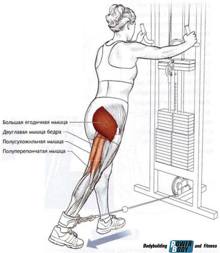 Махи ногой назад стоя мышцы
