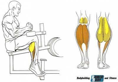 Подъем на носки сидя мышцы