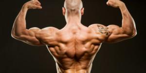 Тренировка спины — как накачать мышцы спины
