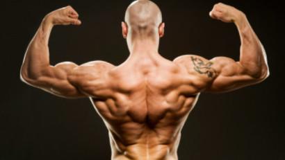 Тренировка спины - как накачать мышцы спины