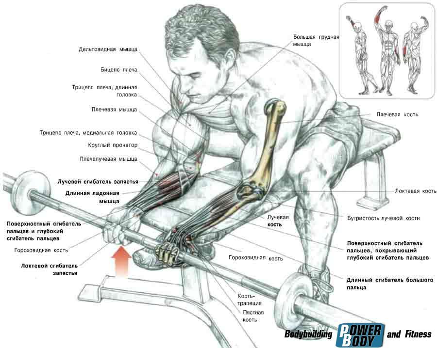 Упражнения для увеличения мышц в домашних условиях 859