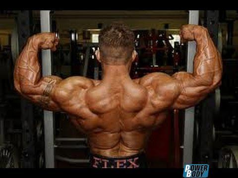 flex lewis back