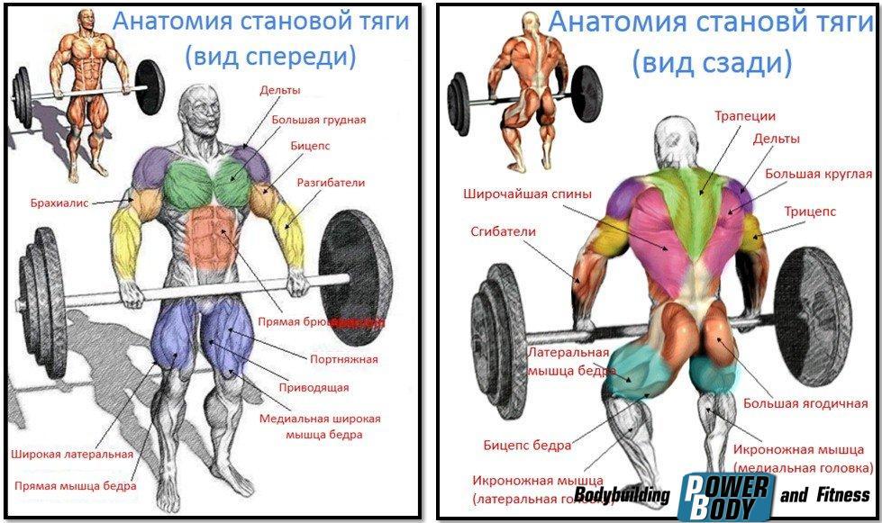 Становая тяга - мышцы, работающие в упражнении