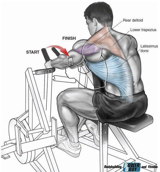 Горизонтальная тяга в тренажере хаммер работающие мышцы