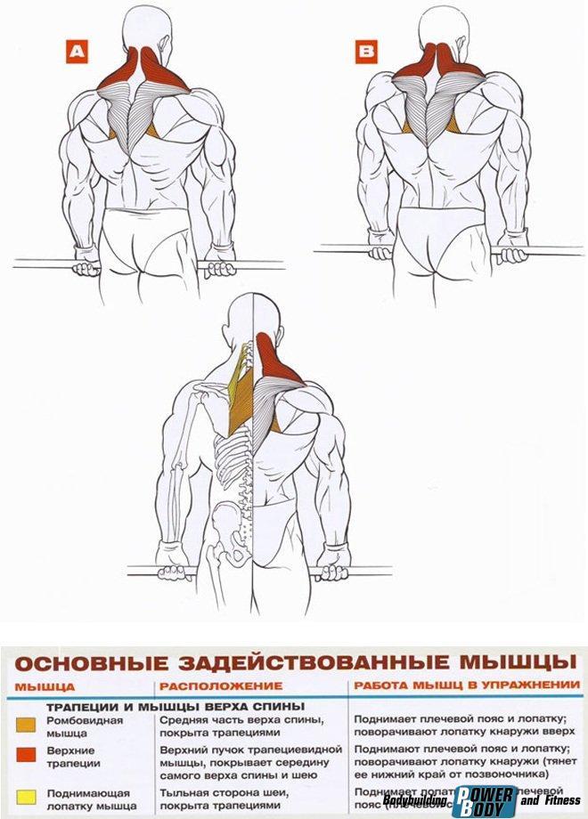 Шраги - работающие мышцы