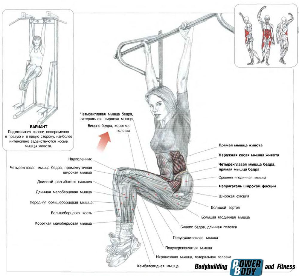 Подъемы ног в висе. Преимущества упражнения и работающие мышцы