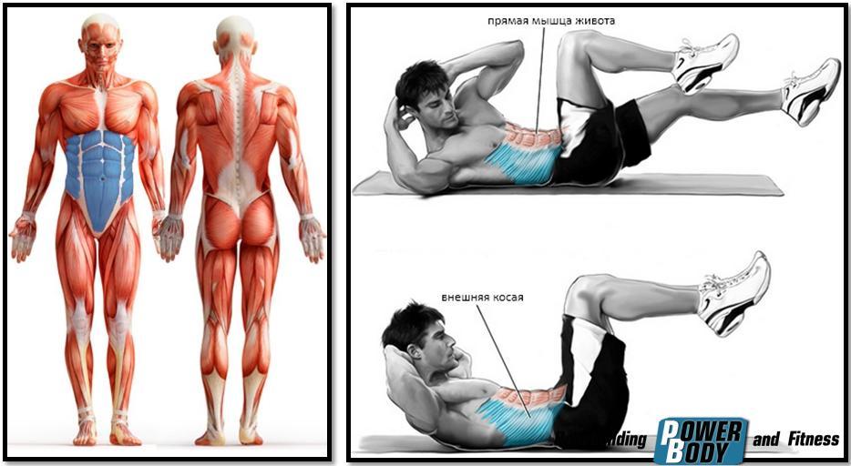 Упражнение «Велосипед» . Работающие мышцы