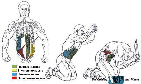 Нагрузка на мышцы. Скручивания на верхнем блоке.